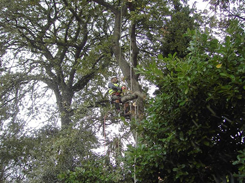 Aerial Tree Dismantling techniques