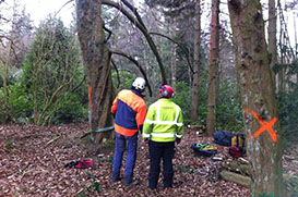 tree climbers tree-surgery training course