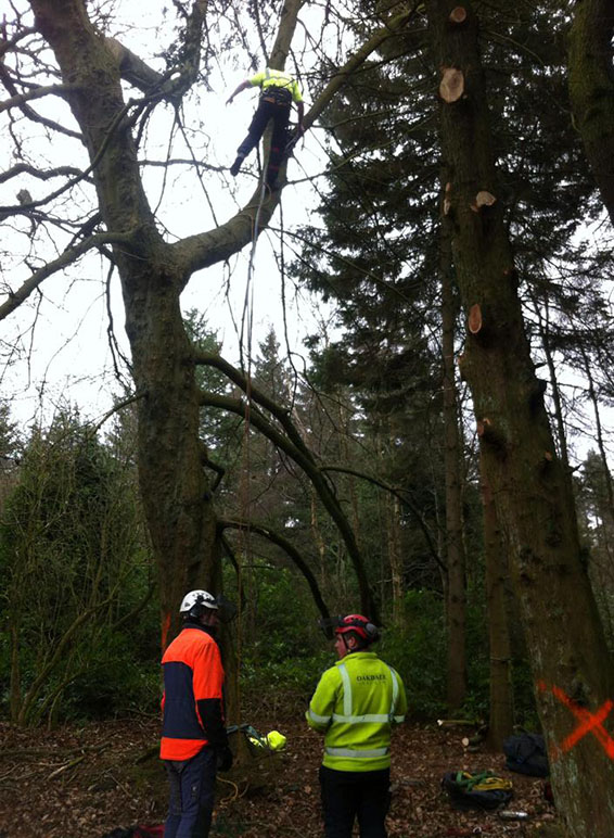 tree climbers trees-surgeon training courses